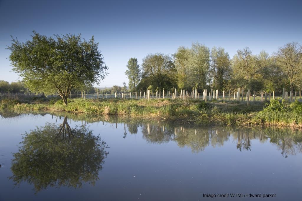 Tree Planting - Keeping Rivers Cool