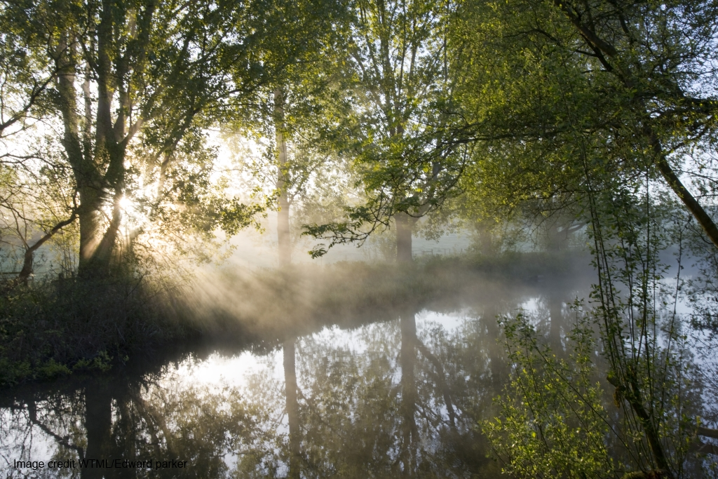 Woodland Trust Keeping Rivers Cool