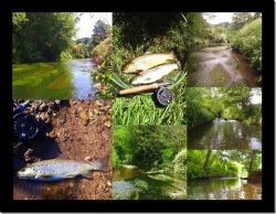 Avon & Tributaries Angling Association Waters