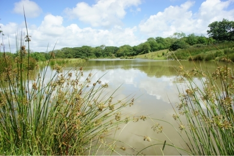 Coarse Fishing Lakes at Hele Barton Holiday Cottages North Cornwall