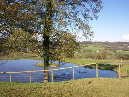 Courtmoor Fishing Pond - Honiton, Devon