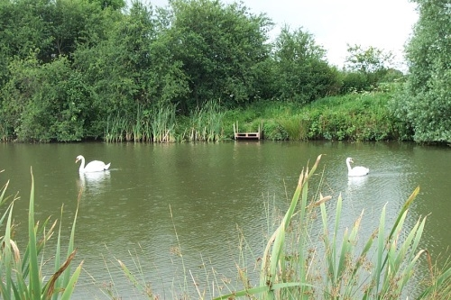 Edneys Coarse Fishing Lakes Frome - Somerset