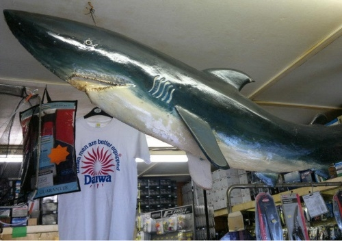 Mevagissey Shark Angling Centre - Mevagissey, Cornwall