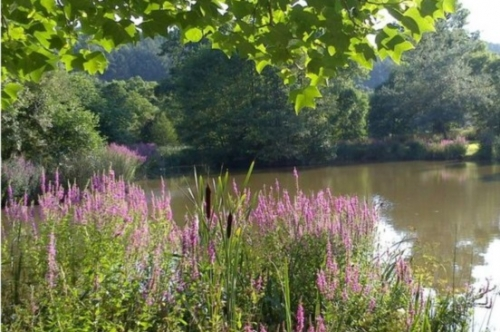 Angling Breaks at Park Mill Farm,Chulmleigh, Devon