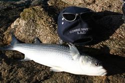 Combe Martin Sea Angling Club