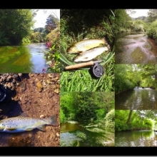 Avon and Tributaries Angling Association Fishing