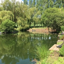 Home Farm Coarse Fishery - Devon
