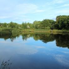 Coarse Fishing Lake at Wooda Lakes  Pancrasweek, Holsworthy, Devon