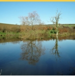 Trewandra Coarse Fishing Lake - Cornwall