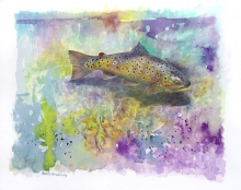 Brown Trout by Robin Armstrong